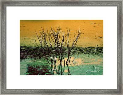 Growing Potential Framed Print by Angelika Drake