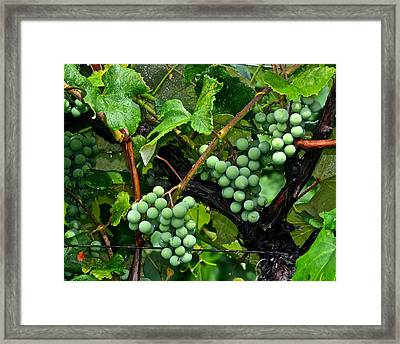 Growing Season Framed Print