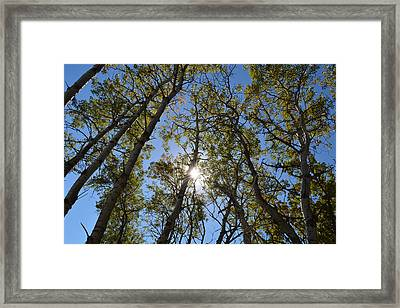Growing Spirit Framed Print