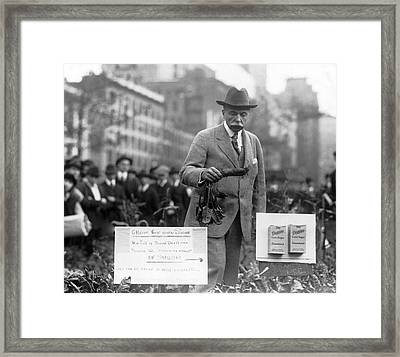 Growing Sugar In New York City Framed Print by Underwood Archives