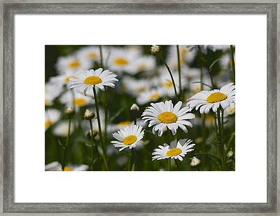 Framed Print featuring the photograph Growing Wild - A L'etat Sauvage by Nature and Wildlife Photography