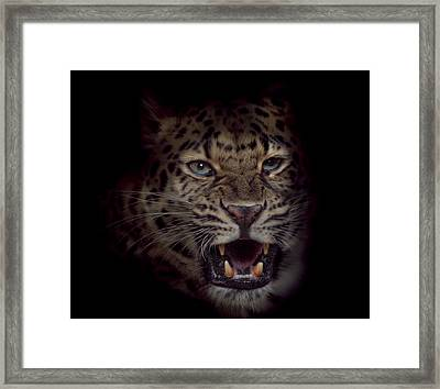 Growl Framed Print