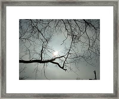 Grown In Cold Light Framed Print