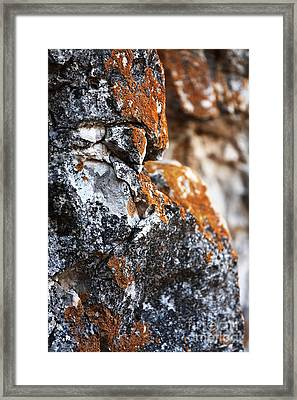 Growth Framed Print by John Rizzuto
