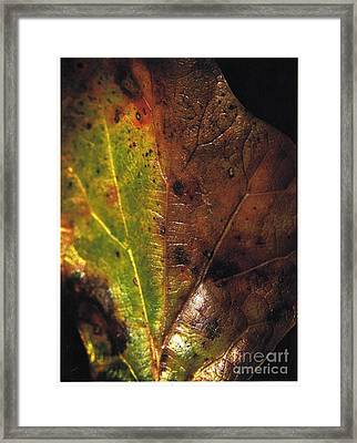 Growth-leaf Framed Print