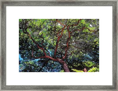 Growth Framed Print by Terry Reynoldson
