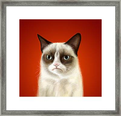 Grumpy Cat Framed Print by Olga Shvartsur