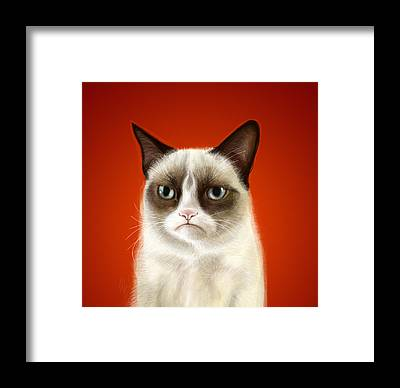 Cat Framed Prints