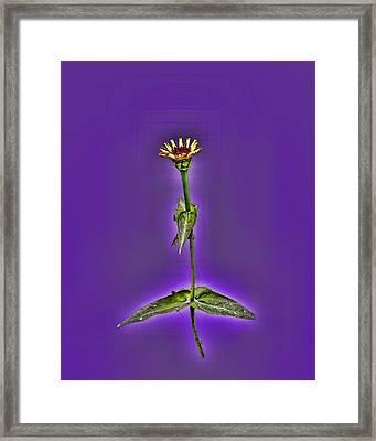 Grunge Flower - Zinnia Framed Print by Larry Bishop