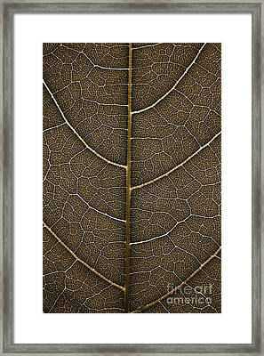 Framed Print featuring the photograph Grunge Leaf Detail by Carsten Reisinger