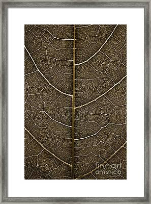 Grunge Leaf Detail Framed Print by Carsten Reisinger