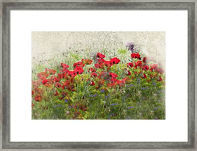 Grunge Poppy Field Framed Print by Lesley Rigg