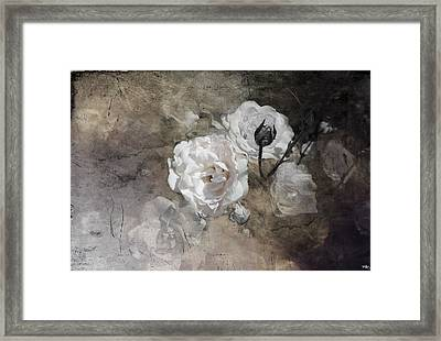 Grunge White Rose Framed Print