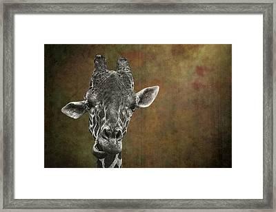 Grungy Giraffe 5654 Brown Framed Print