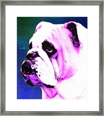 Grunt - Bulldog Pop Art By Sharon Cummings Framed Print