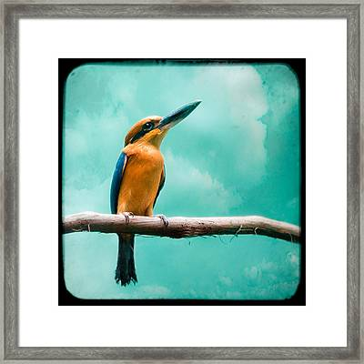 Framed Print featuring the photograph Guam Kingfisher - Exotic Birds by Gary Heller