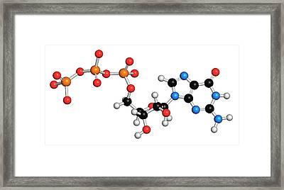 Guanosine Triphosphate Molecule Framed Print by Molekuul