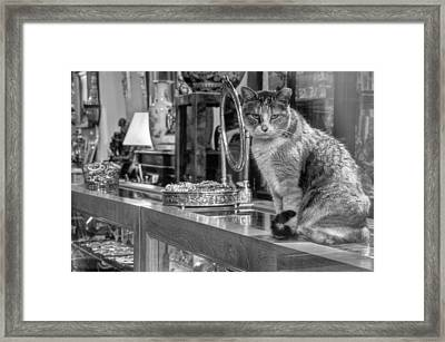 Guard Cat Framed Print by Ron White