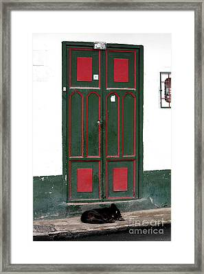 Guard Dog In Sopo Framed Print by John Rizzuto