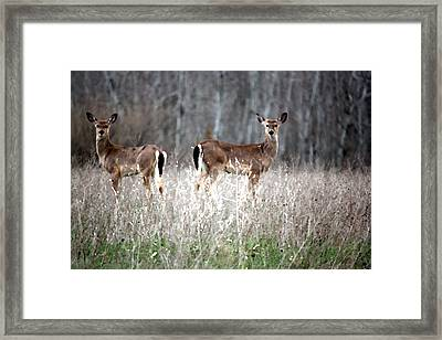 Framed Print featuring the photograph Guard Duty Whitetail Deer by Penny Hunt