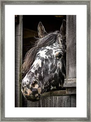 Guard Horse-what's The Password? Framed Print