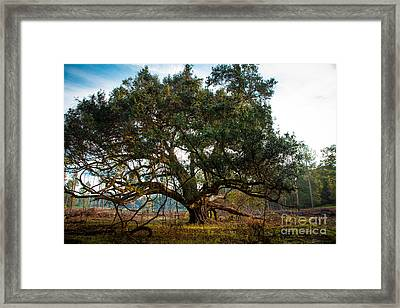 Guard Of Windsor Framed Print by T Lowry Wilson