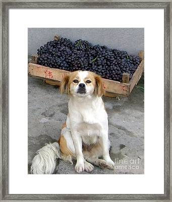 Guardian Of The Grapes Framed Print by Barbie Corbett-Newmin