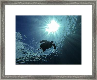 Guardian Of The Sea Framed Print by Brad Scott