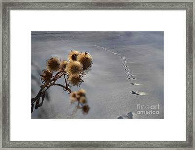 Guardian Of The Windswept Trail Framed Print by The Stone Age