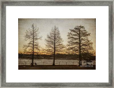 Guardian Trees Framed Print by Terry Rowe