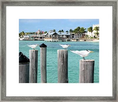 Guardians Of Key West Framed Print