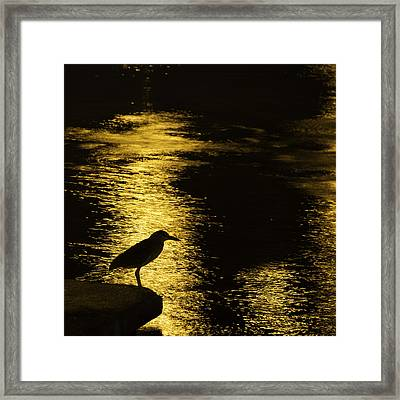 Guarding The Gold Framed Print by Kathy Ponce