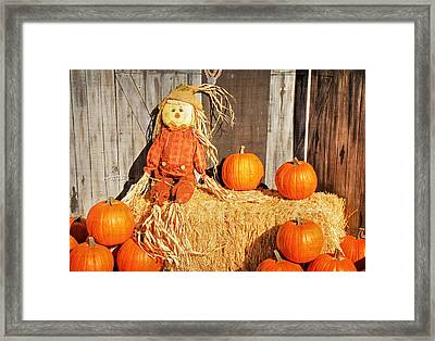 Guarding The Pumpkins Framed Print by Donna Kennedy
