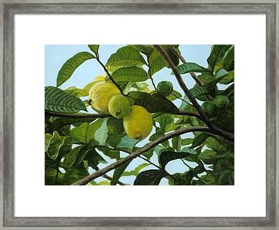 Guava Framed Print