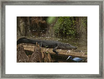 Guess What's For Dinner Framed Print by Bill