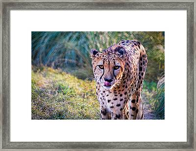 Guess Whose Hungry Framed Print by Tim Stanley