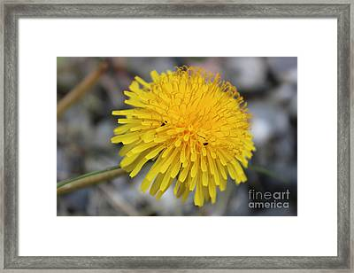 Guesthouse Framed Print