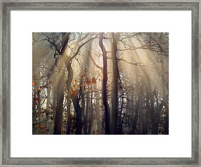 Guiding Light Framed Print by Dianne Cowen