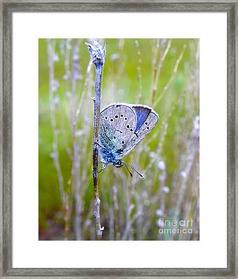 Guilded Blue Framed Print