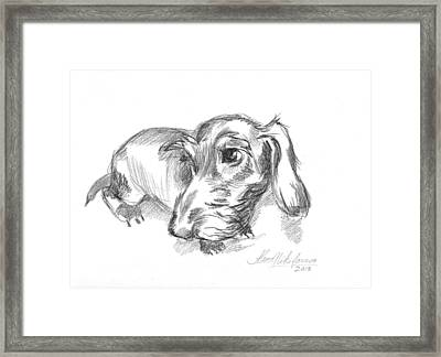 Guilty-looking Young Wire-haired Dachshund Framed Print