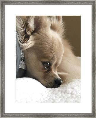 Guilty Or Innocent Framed Print by Sharon Costa