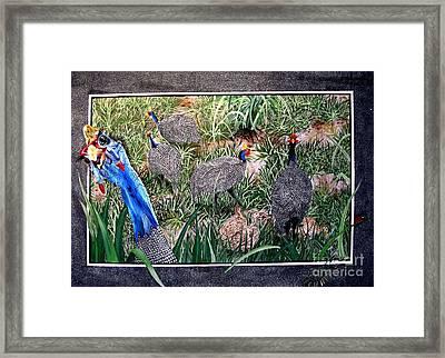 Guinea Fowl In Guinea Grass Framed Print by Sylvie Heasman