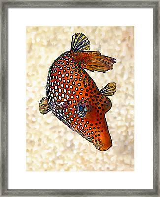 Guinea Fowl Puffer Fish Framed Print by ABeautifulSky Photography
