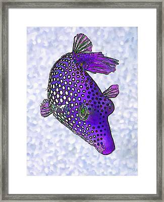 Guinea Fowl Puffer Fish In Purple Framed Print
