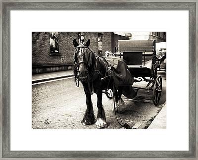 Guinness Horse Framed Print