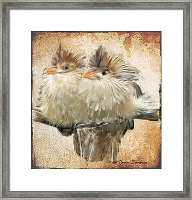 Guira Cuckoos Framed Print by Ginger Sizemore