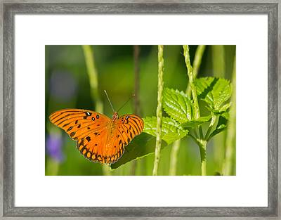 Framed Print featuring the photograph Gulf Fritillary by Jane Luxton