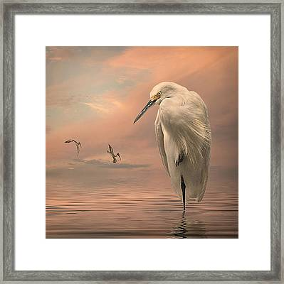 Gulf Sunset Framed Print by Brian Tarr