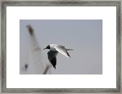 Gull And Crane Framed Print by Frederic Vigne