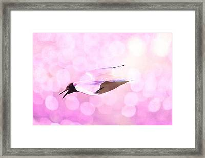 Gull And Nice Bokhe Framed Print